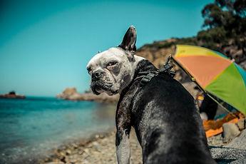 pup look.jpg
