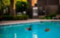 ducks in a pool.jpg