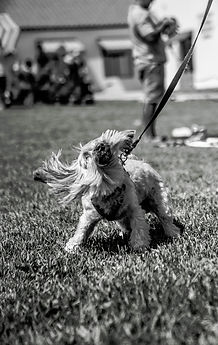 pupper flop.jpg