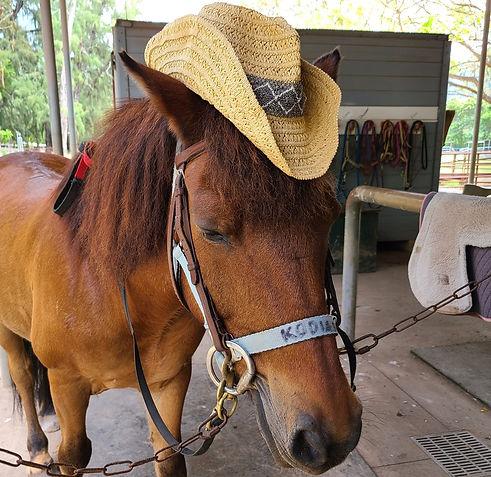 HorseWithHat_edited.jpg