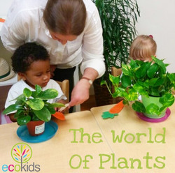 The World Of Plants - Summer