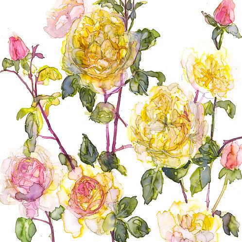 Charles Darwin Roses Greeting Card