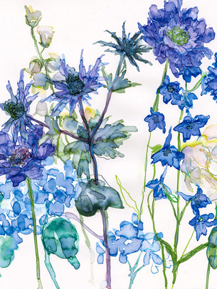 Sea Holly and Larkspur