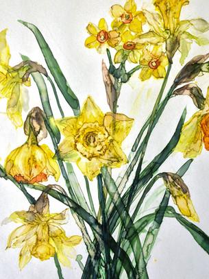 Mixed Yellow Daffodils