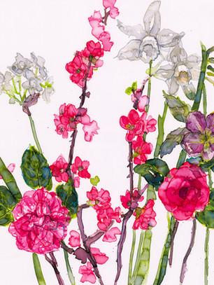 Spring Flowers and Camelia