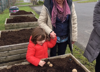 Planting Potatoes!