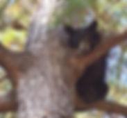 bear-tree.jpg