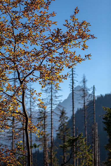 2018_Poland_Tatra_Oct17_PS-0355.jpg