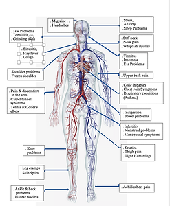 Bowen anatomy pic 2020-08-18 at 10.17.pn
