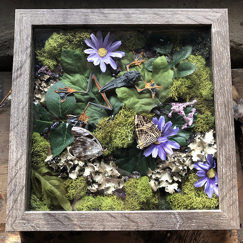 Frog & Butterfly Shadowbox