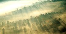 Утренний туман над деревья