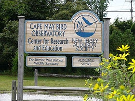 cape may bird sanctuary.jpg