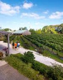 cape may vineyard.jpg