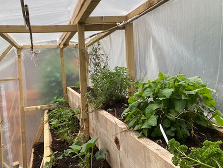 January 2020: Growing your own produce and making it work