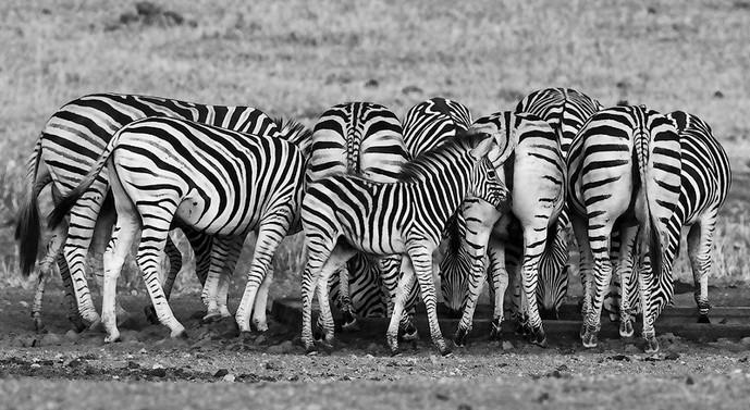 Hidden in the stripes_D5A0598.jpg