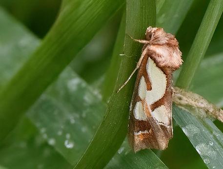 Moth_D5C9616.jpg