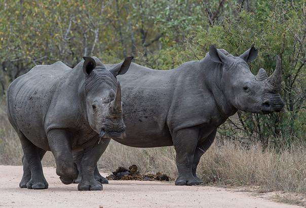 2-rhino-4SB_5236-800.jpg