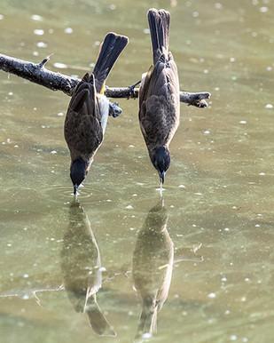2 Birds-4SB_5689-500.jpg