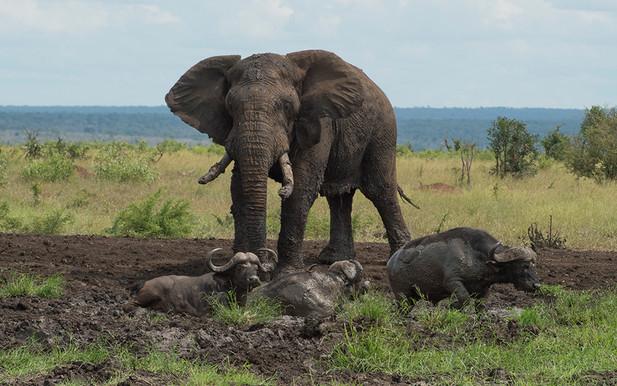 Elephant mud_4SE0498.jpg