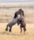 Wild horses.jpg.jpg