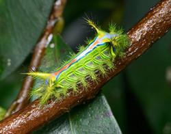 SN caterpillar_D8C6261-Topaz-web1910x150