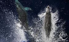 cirque de la nuit ibiza boat party dolph