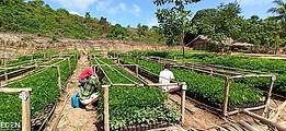 workers in field.jpg