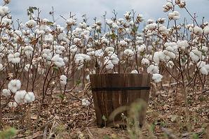 cotton-5601976_640.jpg