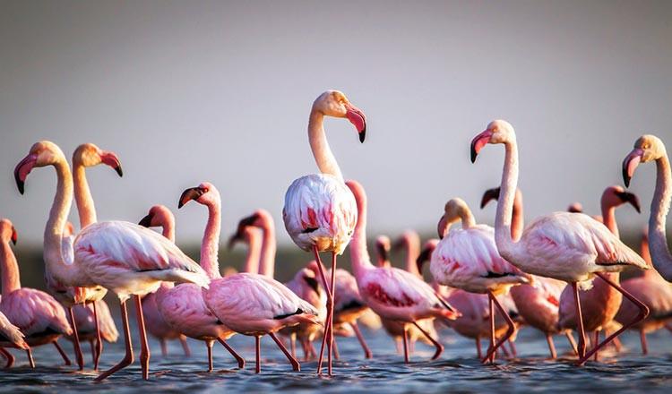 flamingos in ses salzen ibiza.jpg