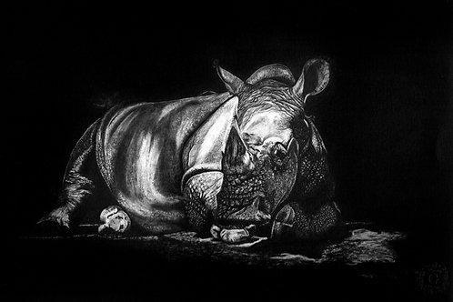 """Rhinocerus"""