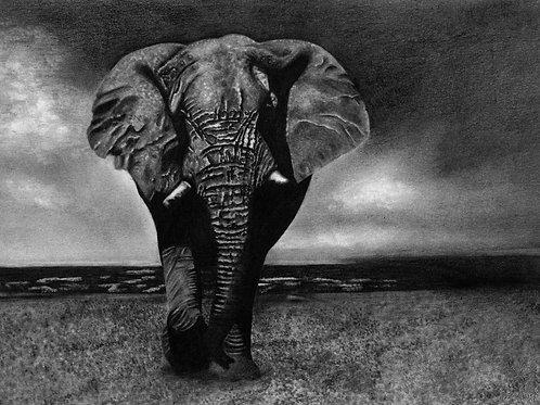 """Elephantus"""