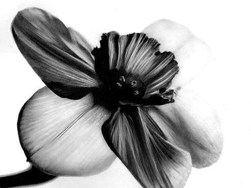 """Orchidaceae"""