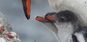 penguin2_edited.jpg