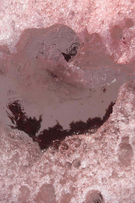 neve com alga vermelha