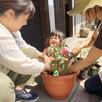 トマトを一緒に植えたよ!