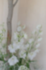 22.06.19_jono&amanda_ceremony_fbp-8.jpg