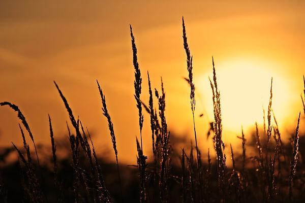 sunrise-3712483_1920.jpg