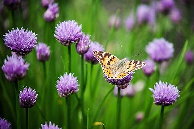 flower-4253120_1920.jpg