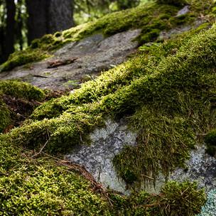 lumi_forest170713_589.jpg