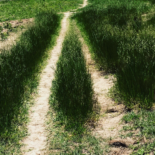 Caminhos que se bifurcam - Fernanda Chemale