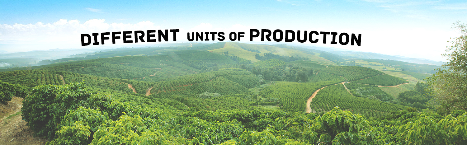 SH COFFEES - Units of production