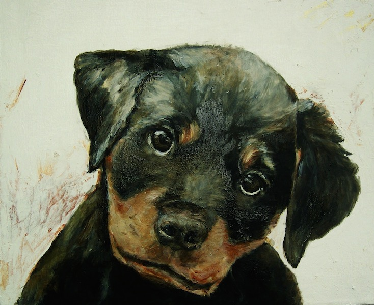 """Rottweiler Pup"" 32x34"" (commission)"