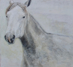 """Connemara Horse"" 32x34"" (sold)."