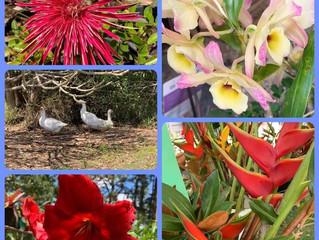 A Garden Party?  What a splendid idea!