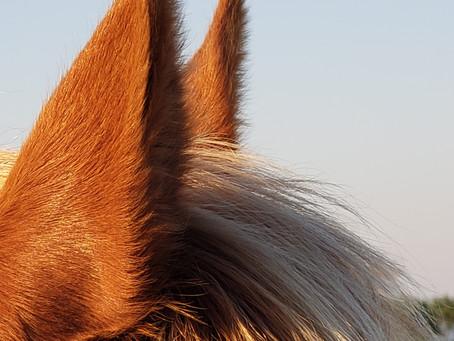 Por qué es terapéutico el trabajo con caballos