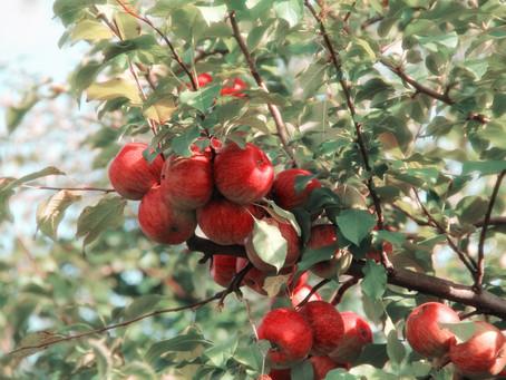 Doce de maçã