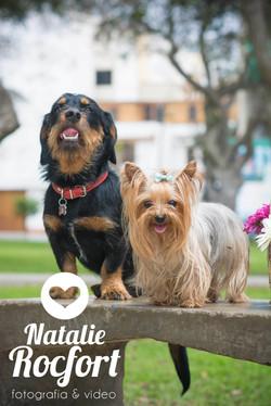 Fotografía de mascotas479 copia.jpg
