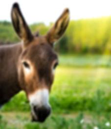 donkeystandlee-2400.jpg