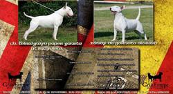 Ch. Teirwgwyn Paper Gansta at Bullyview & Xandy de Garnata Alvejud