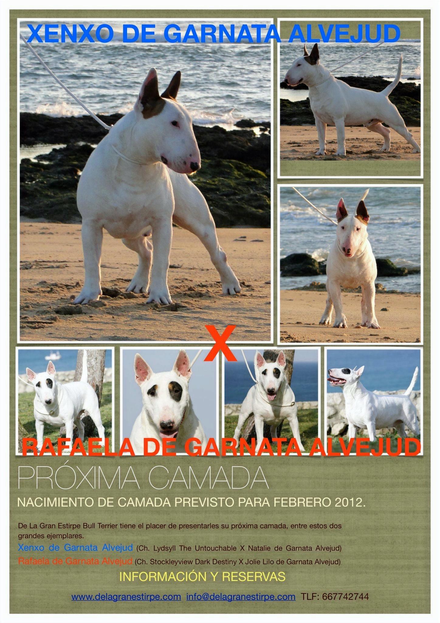 Rafaela de Garnata Alvejud & Xenxo de Garnata Alvejud